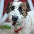 Adopt A Pet :: Rosaline