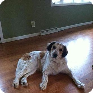 Great Pyrenees Mix Dog for adoption in Silver Lake, Wisconsin - Lexi