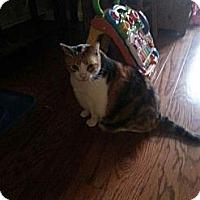 Adopt A Pet :: Dolly - Brooklyn, NY