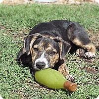 Adopt A Pet :: TYSON - Torrance, CA
