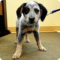 Adopt A Pet :: Regan - Beachwood, OH