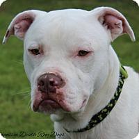 Adopt A Pet :: Emmett - Mount Juliet, TN