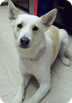 Shepherd (Unknown Type) Mix Dog for adoption in Sterling, Kansas - Coach