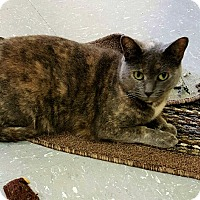 Adopt A Pet :: Rachel Rae - Scottsburg, IN