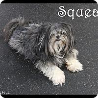 Adopt A Pet :: Zoe - Rockwall, TX