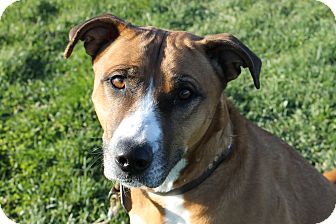 Shepherd (Unknown Type) Mix Dog for adoption in Grinnell, Iowa - Krissy