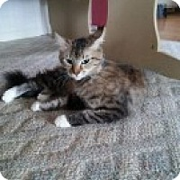 Adopt A Pet :: Thelma - McHenry, IL
