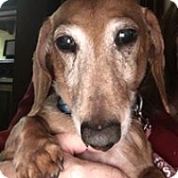 Adopt A Pet :: Cracker Jack - Marcellus, MI