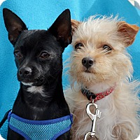Adopt A Pet :: Oreo and Cameo - BONDED PAIR - Pittsburgh, PA