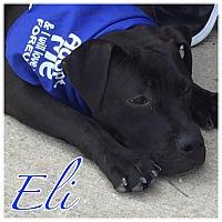 Adopt A Pet :: Eli - High Point, NC
