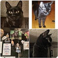 Adopt A Pet :: Dinky Destiny - Phoenix, AZ