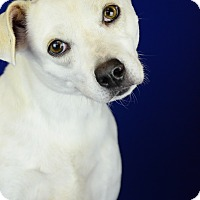 Adopt A Pet :: PRETTY GIRL - LAFAYETTE, LA
