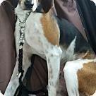 Adopt A Pet :: Journey - Adoption Pending