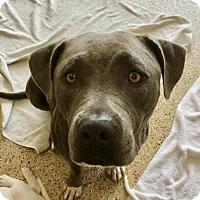 Adopt A Pet :: Brie - Mission Viejo, CA