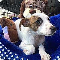 Adopt A Pet :: Kirk - Greensboro, GA