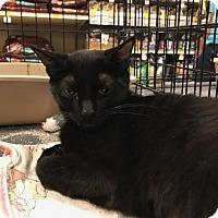 Adopt A Pet :: Albion - Sacramento, CA