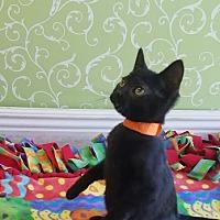 Adopt A Pet :: Aurora - Red Wing, MN