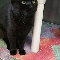 Adopt A Pet :: Emerald - Chippewa Falls, WI