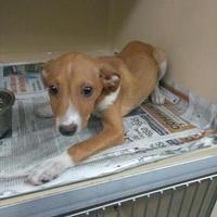 Adopt A Pet :: Jackson - Clarkesville, GA