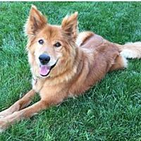 Adopt A Pet :: Roxy- adoption pending - Tipp City, OH