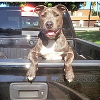 Adopt A Pet :: ZZ-Bandit *courtesy post - Rancho Santa Margarita, CA