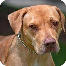 Terrier (Unknown Type, Medium) Mix Dog for adoption in Sarasota, Florida - Whiskey