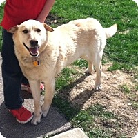 Adopt A Pet :: Maxwell Gregory - Oak Brook, IL