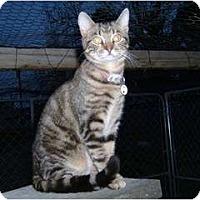 Adopt A Pet :: Kenta - Farmington, AR