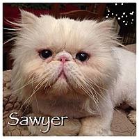 Adopt A Pet :: Sawyer - Beverly Hills, CA