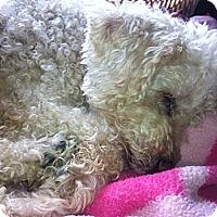 Adopt A Pet :: Granny - New Washington, IN