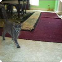 Adopt A Pet :: Flopsy - Mobile, AL