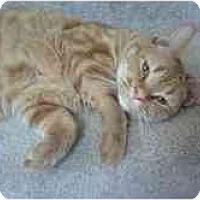 Adopt A Pet :: Buddy L - Greenville, SC