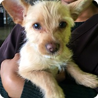 Adopt A Pet :: Sparky - Santa Monica, CA