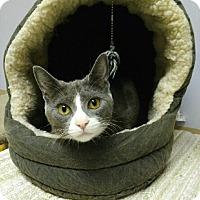 Adopt A Pet :: Everly - Oak Park, IL