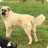 Adopt A Pet :: Riley - Kyle, TX