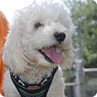 Adopt A Pet :: Max - Fort Atkinson, WI