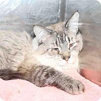 Adopt A Pet :: *INDIANA* - Salt Lake City, UT