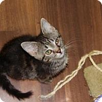 Adopt A Pet :: Beezus - Huntsville, AL