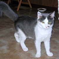 Adopt A Pet :: Doc - Rutledge, TN