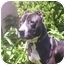 Photo 4 - Pit Bull Terrier Mix Dog for adoption in Poway, California - Coby