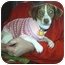 Photo 2 - Jack Russell Terrier/Dachshund Mix Dog for adoption in cedar grove, Indiana - Sally