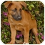 Photo 3 - German Shepherd Dog Mix Puppy for adoption in Los Angeles, California - Coral von Lawall