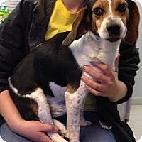 Adopt A Pet :: Jasper Henderson - Waldorf, MD