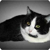 Adopt A Pet :: Smudgey - Montgomery, IL