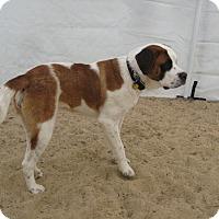 Adopt A Pet :: DOTTIE - ADOPTION PENDING - Sudbury, MA