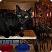 Adopt A Pet :: Blacky - Whiting, IN