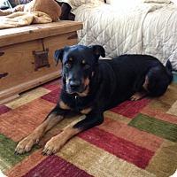 Adopt A Pet :: Handsome - Sandston, VA