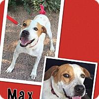 Adopt A Pet :: Max - Scottsdale, AZ