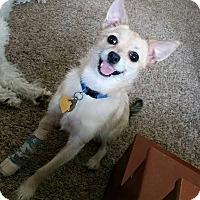 Adopt A Pet :: Benji - Osseo, MN