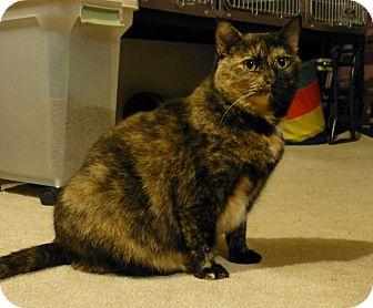 Domestic Shorthair Cat for adoption in Carlisle, Pennsylvania - Emma
